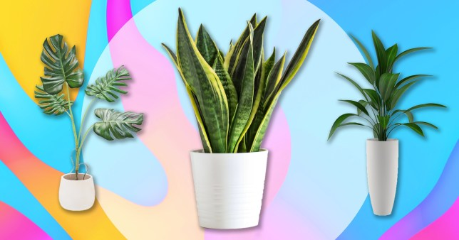 houseplants on colourful background