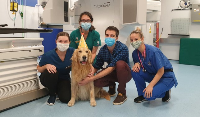 Golden retriever has party to celebrate end of radiotherapy due to brain tumour