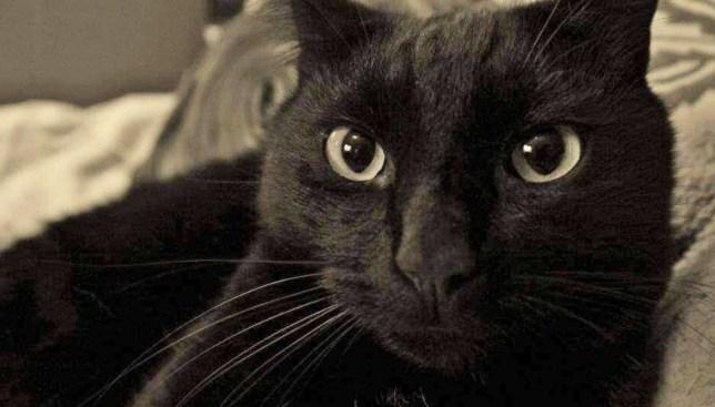 black cat called mo