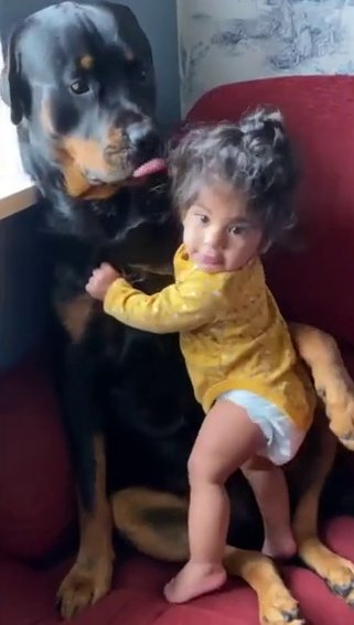 A baby girl cuddles the family Rottweiler in a video posted on Instagram by her mother