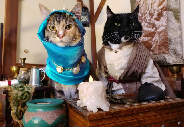 cats dressed up as Elder Scrolls merchants
