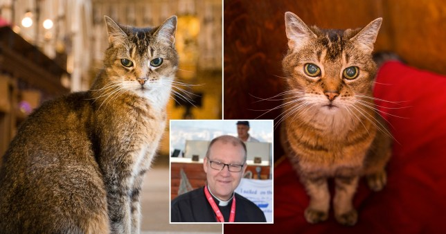 The Dean of Southwark held a memorial service for the church cat Doorkins Magnificat who died this year after living at the church since 2013. A bishop and others blasted the funeral as 'insensitive' to those who cannot say goodbye to their loved ones because they are under stricter coronavirus restrictions.