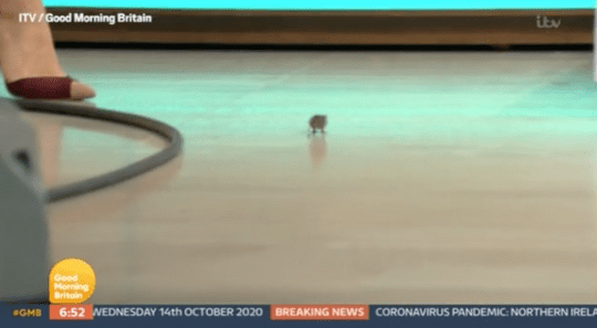 Mouse in the GMB studios