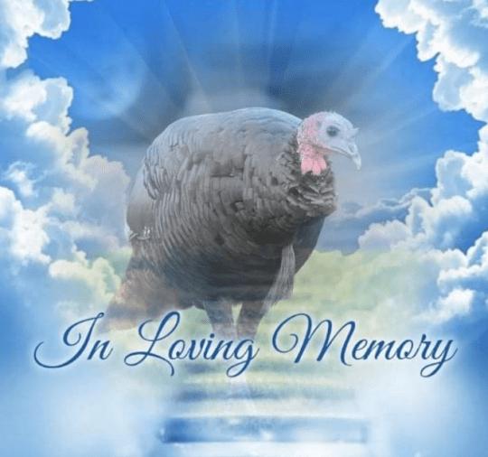 Homenagem a Penny, o peru
