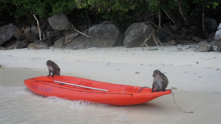Two macaques sitting on a kayak