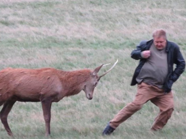 People are warned not to get too close to the deer