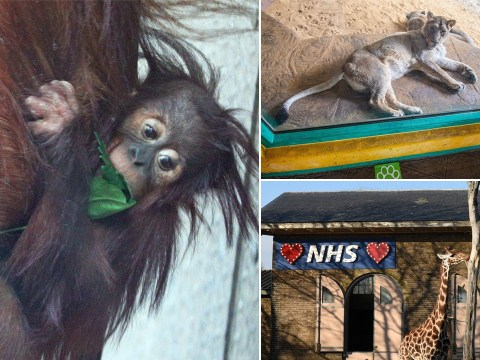 'Lonely' animals at London Zoo 'miss seeing visitors during lockdown'
