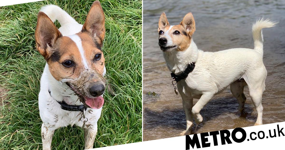 Dog given days to live shocks everyone by still being alive 18 months later