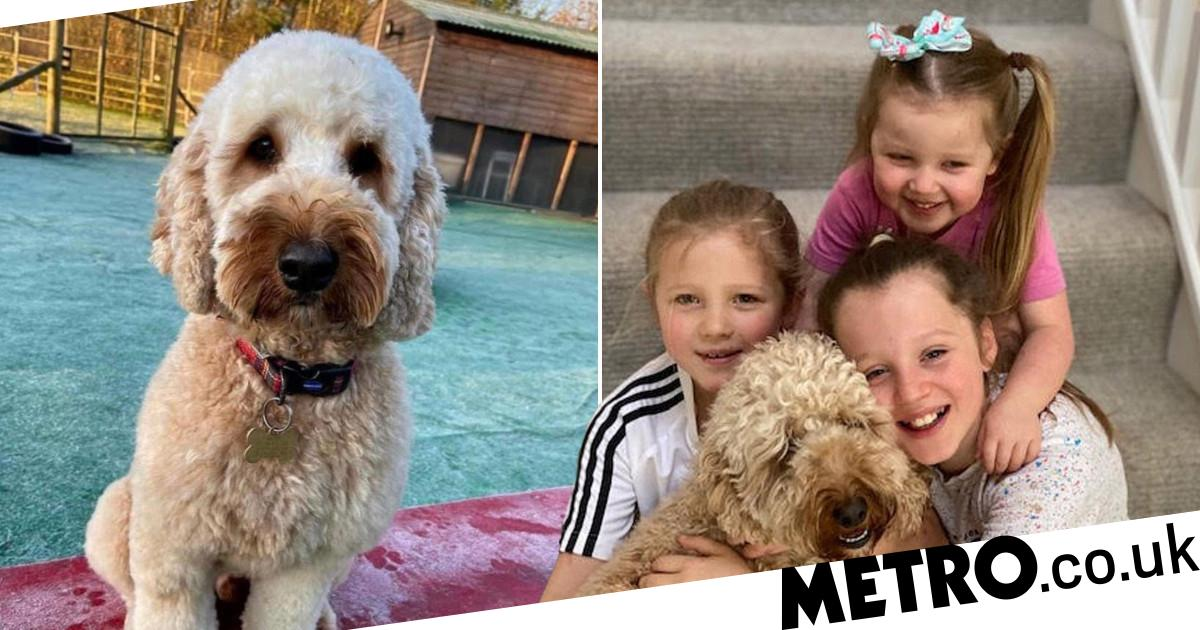 Farmer shot family's tiny cockapoo in face 'then smiled at owner'