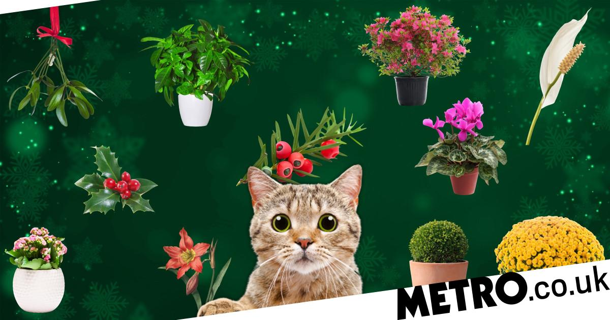 These festive plants could be a danger to your pets