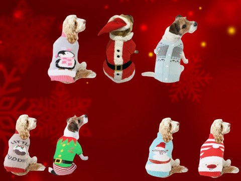 B&M launches Christmas outfits for dogs