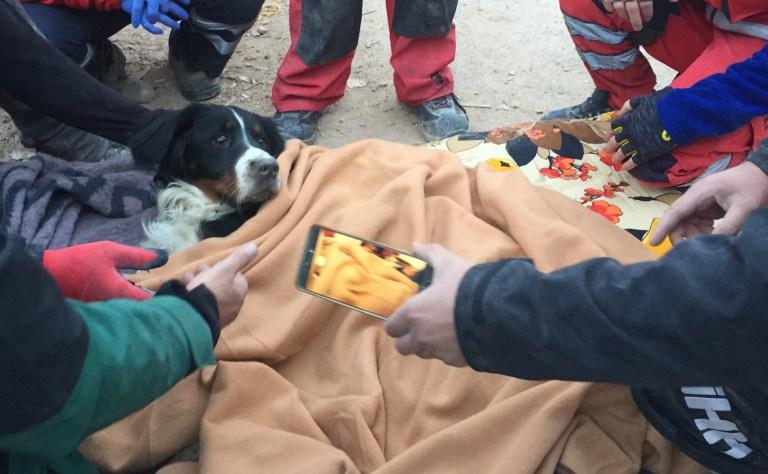 Un chien nommé `` Ares '' est sauvé des décombres de l'immeuble Riza Bey 65 heures après qu'un séisme de magnitude 6,6 a secoué la côte turque de la mer Égée, à Izmir, en Turquie, le 02 novembre 2020.