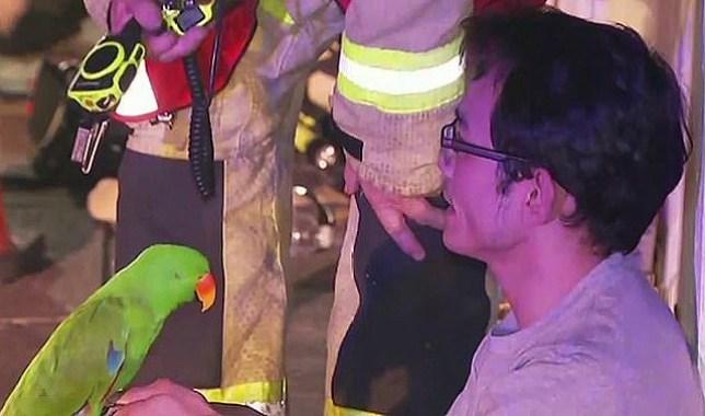 Un perroquet de compagnie a sauvé son propriétaire Anton Nguyen quand il l'a réveillé et l'a alerté que sa maison était en feu à Brisbane, Queensland.