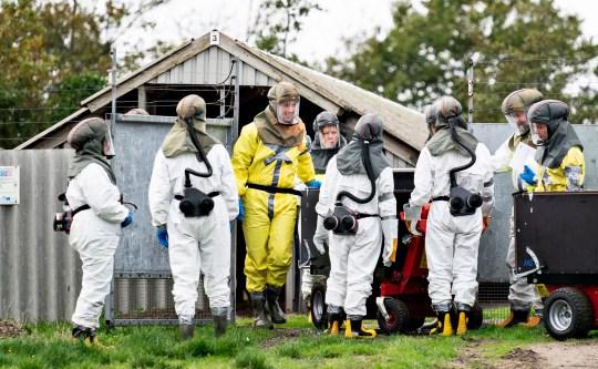 epa08798606 Des employés de l'administration vétérinaire et alimentaire danoise et de l'Agence danoise de gestion des urgences en équipement de protection ont commencé à tuer le vison dans une ferme à fourrure à Gjoel, Danemark, le 8 octobre 2020 (publié le 4 novembre 2020).  Des rapports du 4 novembre 2020 indiquent que le Danemark prévoit d'abattre tous les visons dans les fermes à fourrure de vison du pays pour contenir la propagation d'une mutation de coronavirus.  Une épidémie de Covid-19 dans des fermes de visons en octobre 2020 a donné lieu à des mesures similaires.  EPA / Henning Bagger DANEMARK OUT