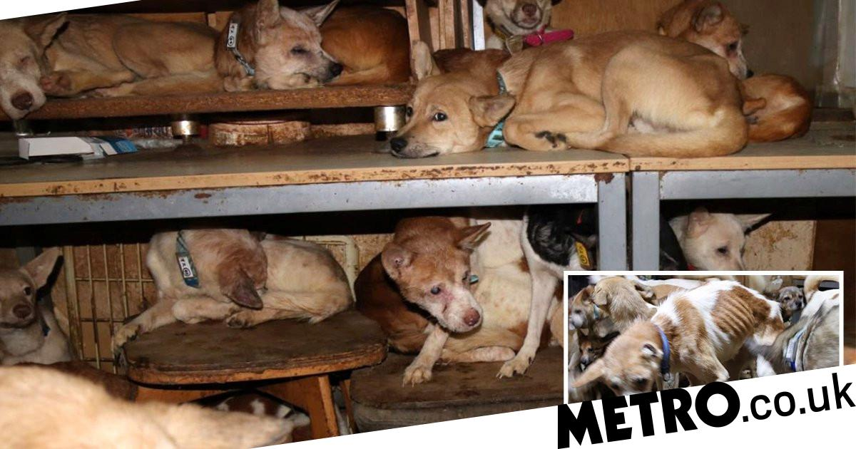 More than 160 starving and diseased dogs rescued from animal hoarding house