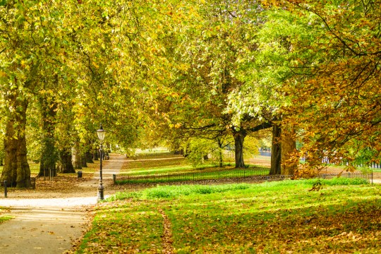 London's Hyde Park on a sunny Autumn day in early November
