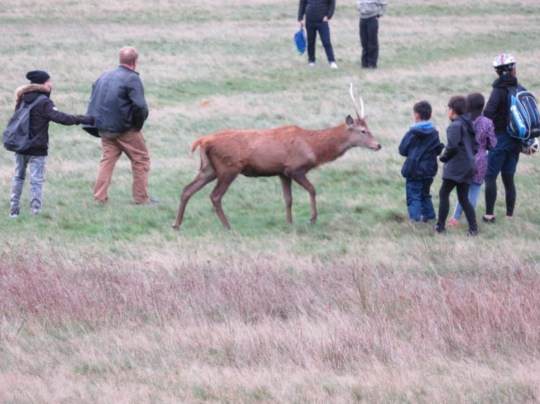 Children were also pictured close to the deer