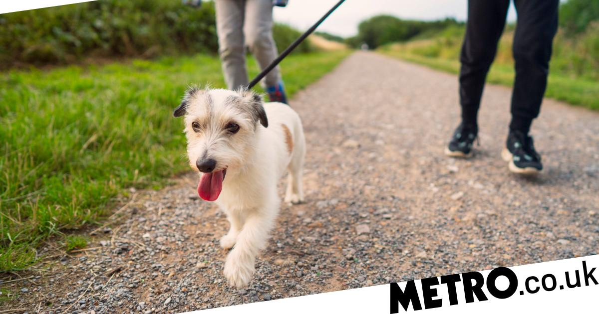 Dog walkers 'are 78% more likely to catch coronavirus'
