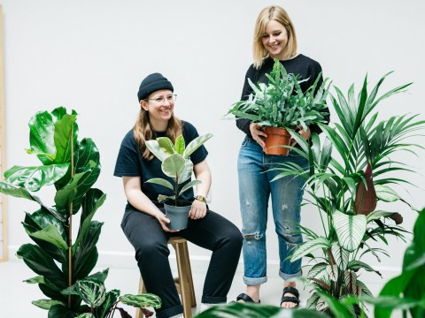 Expert tips for looking after houseplants over winter