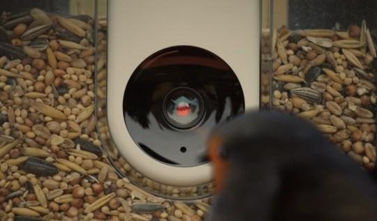 A camera pointing at a bird