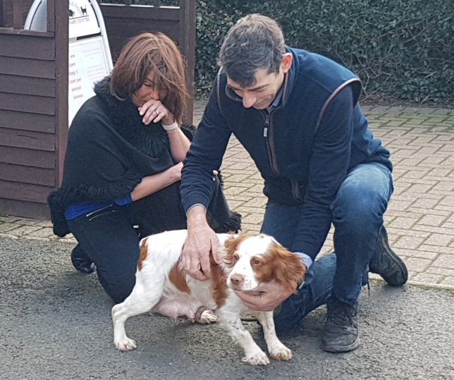 This video shows the moment two delighted dog owners were reunited with their pet pooch Bonnie who was stolen six years ago. See SWNS story SWBRdog; Simon Hall, 50, and his wife Caroline, 48, had their dog stolen in May 2014 and have been distraught ever since. They had both given up hope of ever seeing Bonnie again, but then she was found in a park on Thursday, November 19, and Simon received a call from a dog warden. And now the pair, from Durham, have been reunited with the missing cocker spaniel the day before her 10th birthday - 200 miles from home in Norfolk. Caroline said: ?We just can?t believe it. It was only a couple of years ago that I gave up up hope but I was still checking all the lost dog sites.