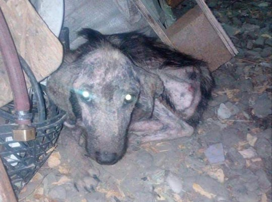 Reuben was found last December in Romania in an awful condition.