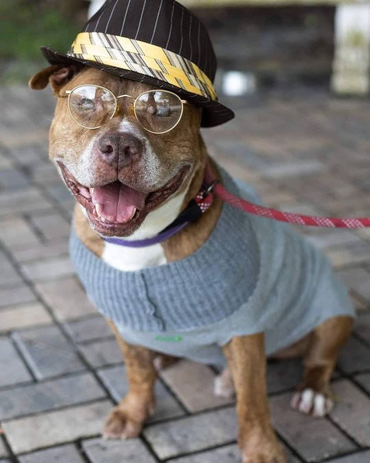 Animal shelter dresses dogs as old people to get them adopted