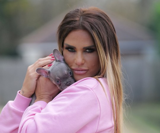 w8media Katie Price is seen with her new puppy ???precious??? taking the new pet out for some fresh air