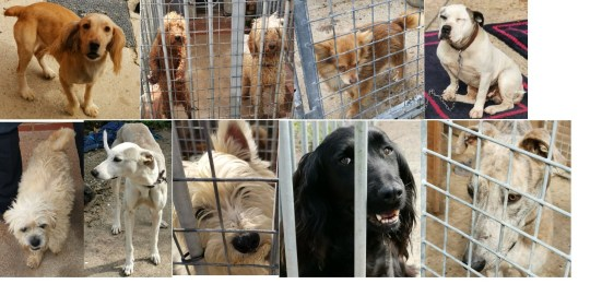 Police 'refusing to hand dogs stolen by travellers back to their owner' - Dogs found in Orprington