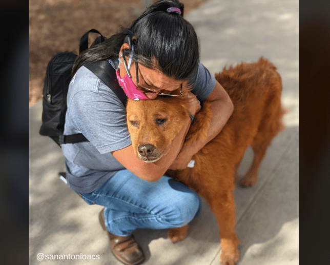 Honey the dog is reunited with her owner