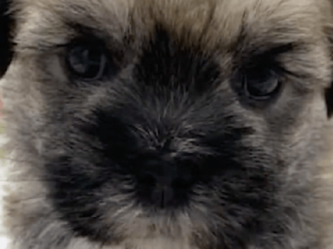 Moment thief steals baby dog from 'puppy boutique'