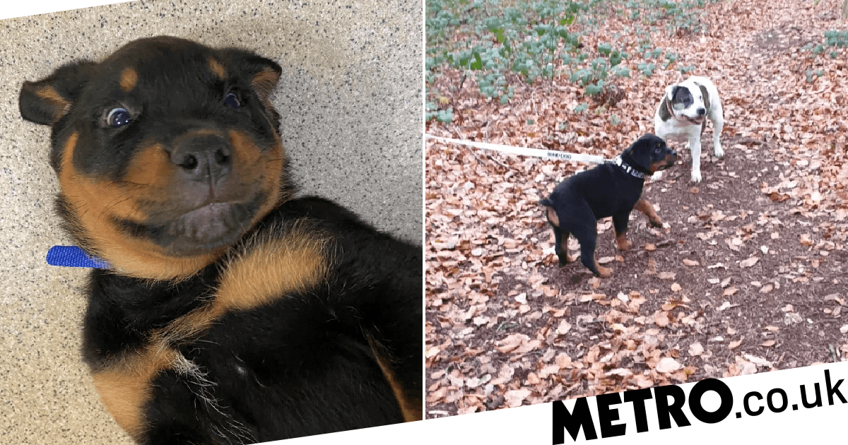 Abandoned blind puppy found wandering in Hyde Park gets a new home