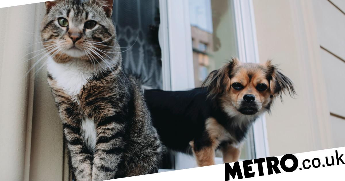 Battersea reveals the most popular cat and dog names of 2020