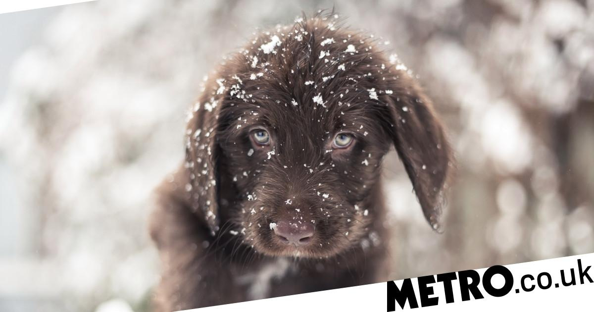 Can you walk dogs in the snow?