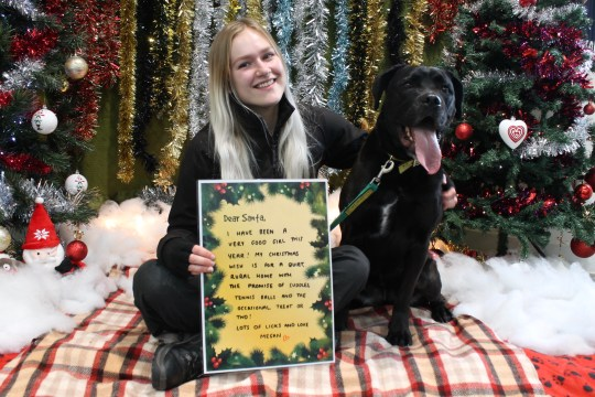 Meghan the three-year-old Labrador cross with her carer and letter