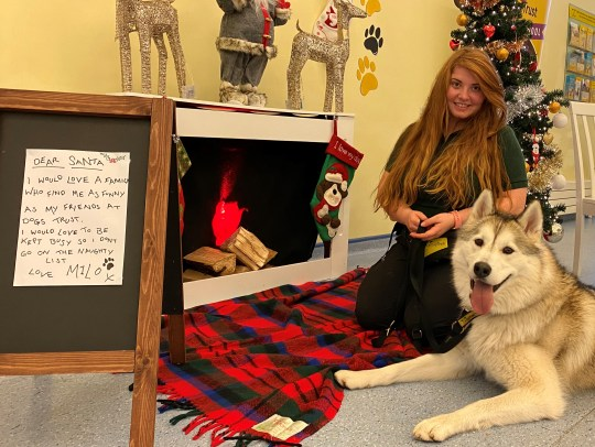 Milo the Husky with his letter to Santa