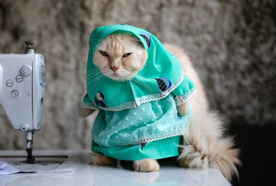 Indonesian tailor creates the cutest cosplay outfits for cats