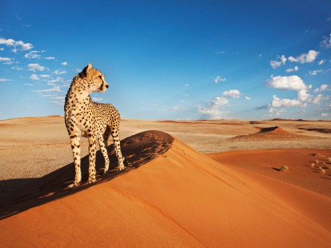 Explore Namibia, the latest country with a travel corridor with the UK
