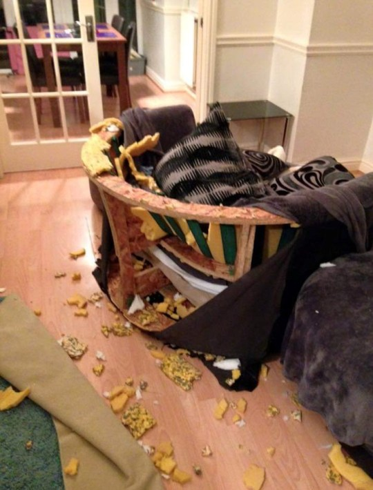 the distruction wrought by Cooper the boxer