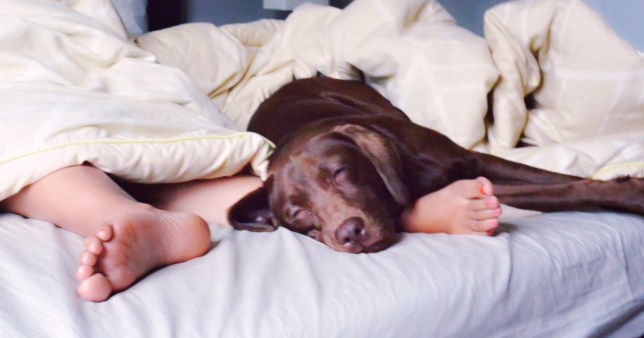person sharing bed with a dog