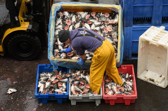 A fisherman sorts and loads trays of salmon heads to be used as bait for crab and lobster pots as he prepares for their next voyage to sea, on the South Pier of Bridlington Harbour fishing port in Bridlington, north east England on December 11, 2020. - A Brexit trade deal between Britain and the European Union looked to be hanging in the balance on Friday, after leaders on both sides of the Channel gave a gloomy assessment of progress in last-gasp talks. Trade talks between the UK and the EU continue in Brussels with EU members' future access to Britain's rich fishing waters remaining a major sticking point. (Photo by OLI SCARFF / AFP) (Photo by OLI SCARFF/AFP via Getty Images)