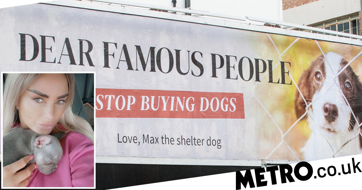 Celebs under fire over 'designer' dogs amid surge in unwanted pets