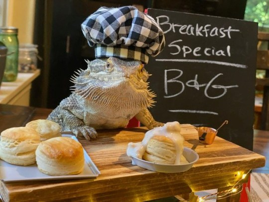 lenny the lizard with breakfast pancakes