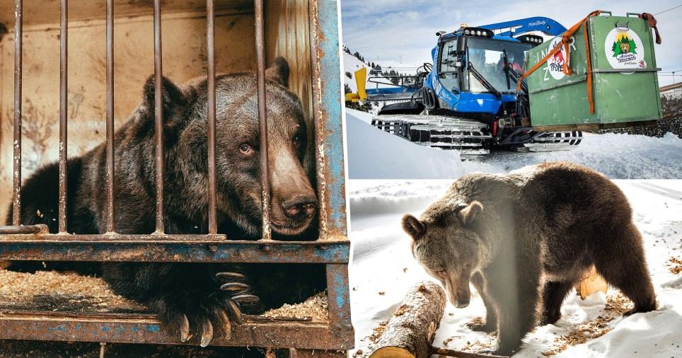 L'ours le plus solitaire du monde rencontre enfin d'autres ours