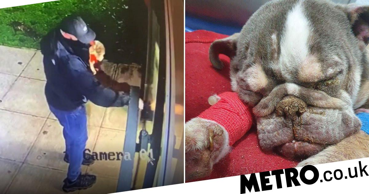 Search for man after starving dog dumped in park 'like piece of rubbish to die'