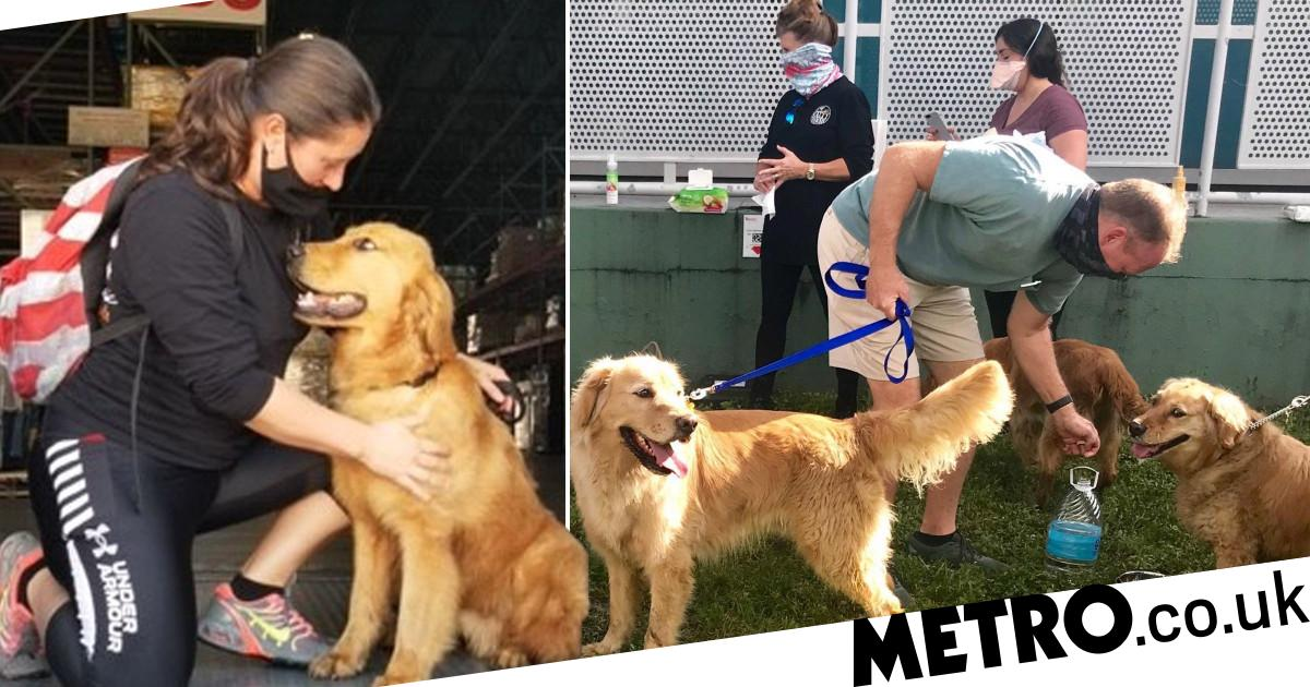 Dog lovers rescue 20 golden retrievers from slaughter in China meat trade