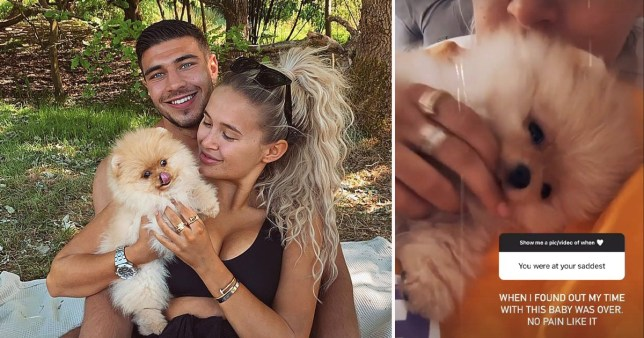 Molly-Mae Hague and Tommy Fury with puppy Mr Chai