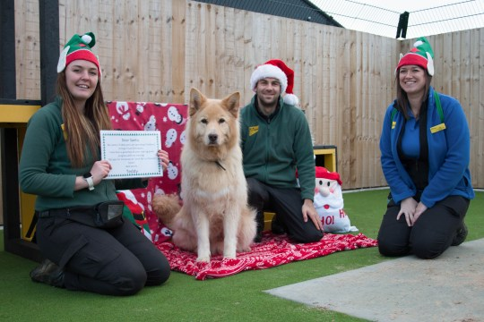 Teddy the German Shepherd with the Dogs Trust team