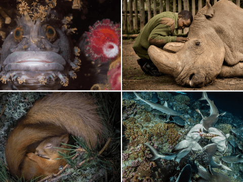 Voting is open for the People's Choice Wildlife Photographer of the Year