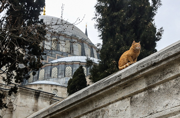 A cat seen a selfie in front of the Sultan Ahmed Mosque.
